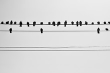 Birds Are Sitting On Wires