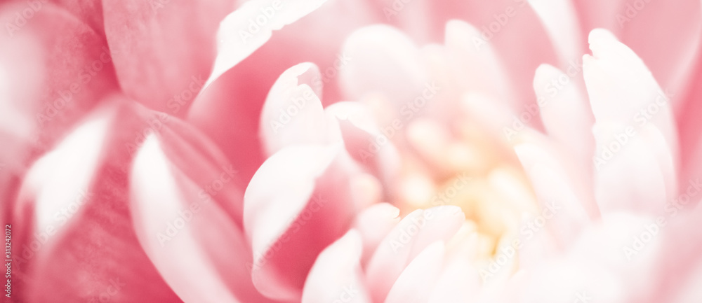 Fototapeta Pink daisy flower petals in bloom, abstract floral blossom art background, flowers in spring nature for perfume scent, wedding, luxury beauty brand holiday design