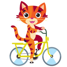 Ginger Cat Riding A Bicycle And Going For A Picnic