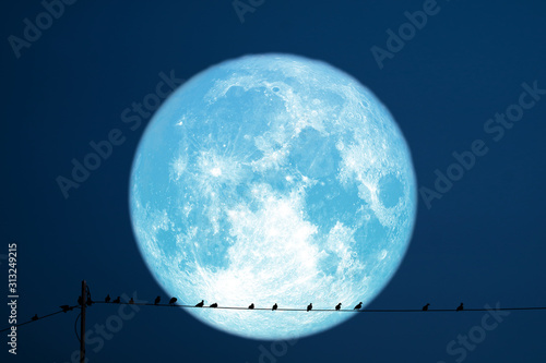 super strawberry moon back on silhouette birds on electric pole night sky Wallpaper Mural