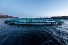 Aquakultur In Norwegen, Kontro...