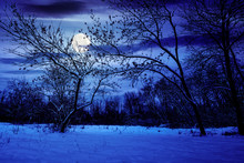 Winter Forest At Night. Trees ...