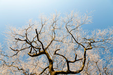 Icy Tree Branches Against A Clear Bright Sky