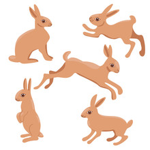 Set Of Rabbits Isolated On A W...