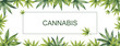 canvas print picture - Banner of green leaves of cannabis on a white background. Watercolor illustration. In the center is a place for your text.