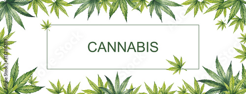 Fototapeta Banner of green leaves of cannabis on a white background. Watercolor illustration. In the center is a place for your text. obraz