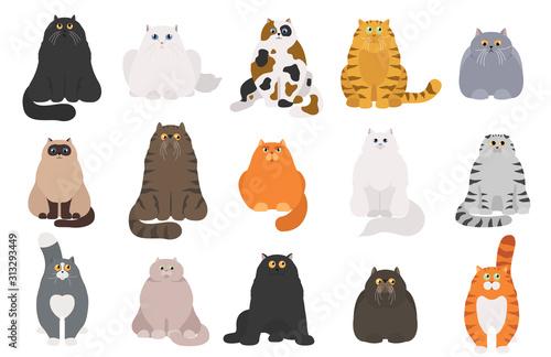 Obraz na plátně Cat poster