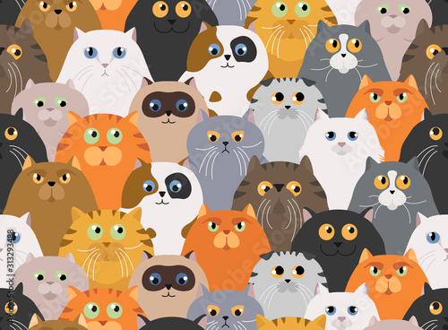 Cat poster Wallpaper Mural