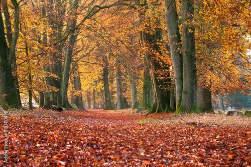 Herbstweg Tablou Canvas