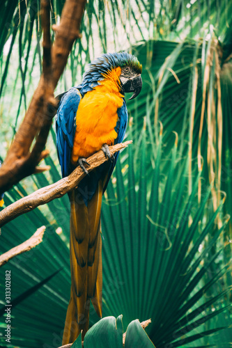Photo  Single Parrot in Jungle