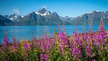 Summer Landscape Of Lofoten Is...