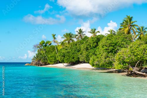 Fototapety, obrazy: Cayo Levantado, Samana Island, Dominican Republic. Idyllic palm tree and beach landscape.