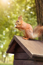 Close Up Cute Squirrel Sitting On Wooden Birdhouse