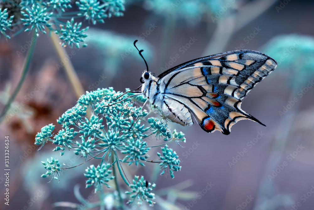 Fototapeta Closeup beautiful butterfly sitting on the flower.