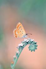 Closeup Beautiful Butterfly Si...