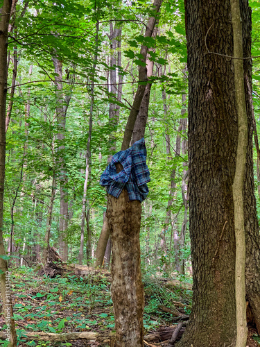 blue shirt on tree in forest