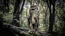 Velociraptor Dinosaur  In The ...