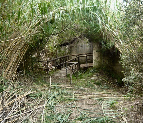 Fototapeta  Mysterious bamboo tunnel arched and falling on nature path with bridge and wooden fence
