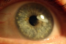 Close Up Of A Blue-gray Eye