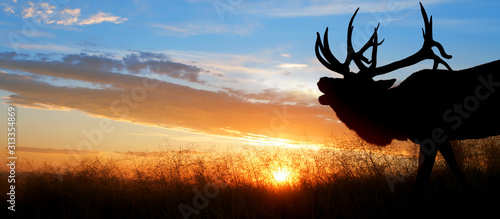 Photo A large bull elk bugling against a sunset