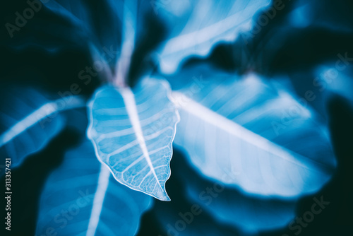 abstract background with colored leave texture and copyspace