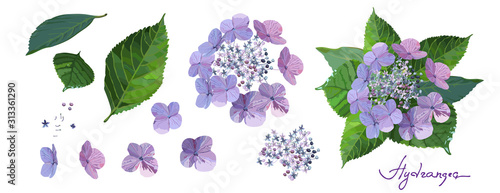 Set of purple hydrangea flowers with bud, stems and leaves on white background Tableau sur Toile