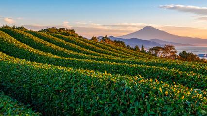 Sunrise over Mt. Fuji / Fuji Mountain and fresh green tea field at Nihondaira, Shizuoka, Japan