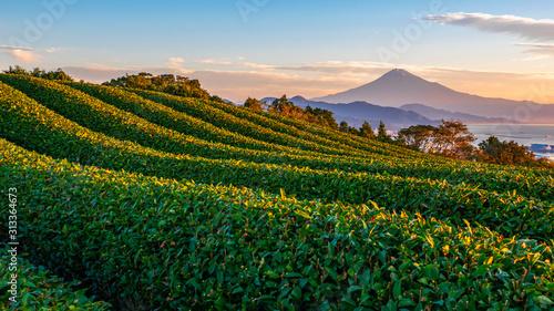 Obraz Sunrise over Mt. Fuji / Fuji Mountain and fresh green tea field at Nihondaira, Shizuoka, Japan - fototapety do salonu