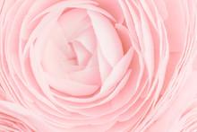 Soft Pink Feminine Peony, Rose...