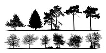Vector Illustration Of A Set Of Silhouettes Of Natural Trees On A White Background