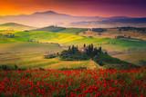 Oszałamiające czerwone maki kwitną na łąkach w Toskanii, Pienzie we Włoszech