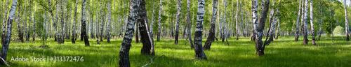 Photo summer birch forest landscape