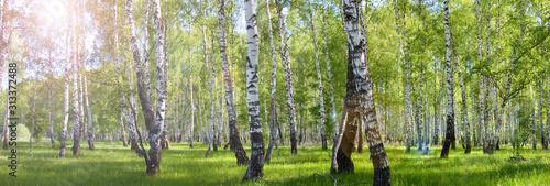 Obraz na płótnie summer birch forest landscape