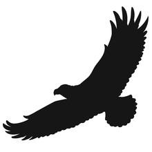 Flying Wild Big Bird, Silhouette Of A Soaring Eagle