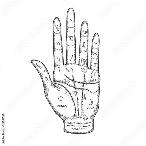 Fototapeta Palm with the image of lines and signs of the zodiac, planets