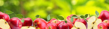 Apples From Your Favorite Garden