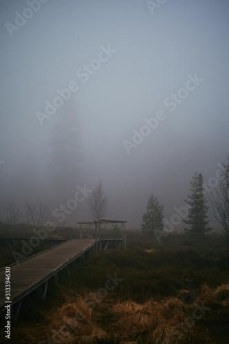 Fotografie, Obraz Lotharpfad auf der Schwarzwaldhochstraße eingehüllt in dichten Nebel des Frühjah