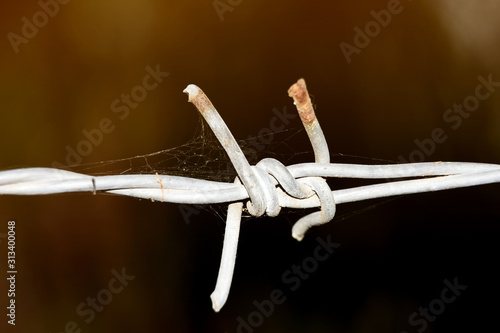 Barbed wire with dark background Wallpaper Mural