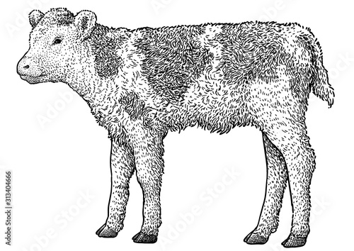 Calf illustration, drawing, engraving, ink, line art, vector Wallpaper Mural
