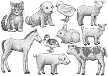 Young Animal Collection, Illus...