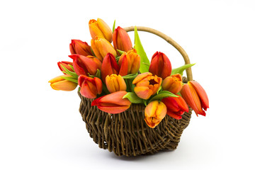tulips in a basket - mother's day