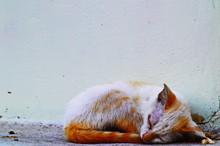 A Shabby Stray Cat Sleep On Th...