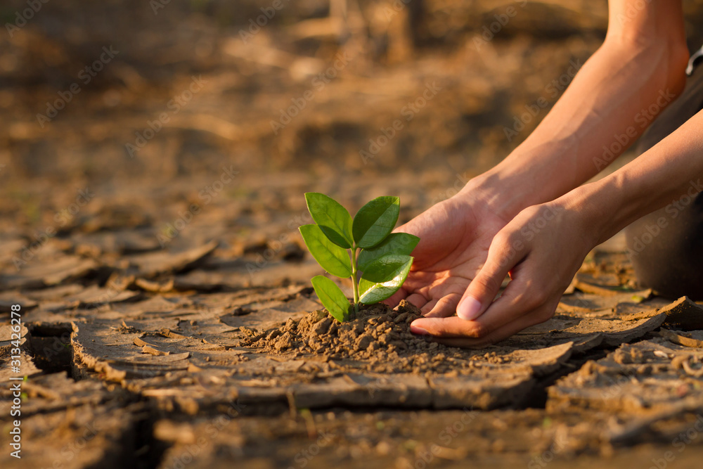Fototapeta Hand of young children or teenager planting a tree on dry cracked land to recovery a nature to green again, Climate change crisis solution, Volunteer and Environment conservation concept.