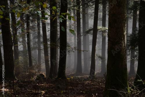 jesienny-nastroj-w-lesie-z-mgla