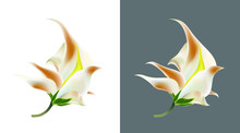 Exotic Tropical Flower. One Flower Is Isolated On White And Dark Backgrounds. Vector