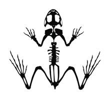 Frog Skeleton Vector Silhouett...