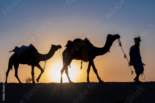Fototapeta Silhouette of a man walking with his camels, Thar desert, Rajasthan, India