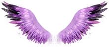Beautiful Magic Watercolor Pink Purple Black Wings