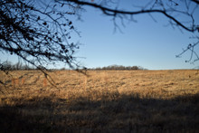 Midwest Ranch View Of Pasture
