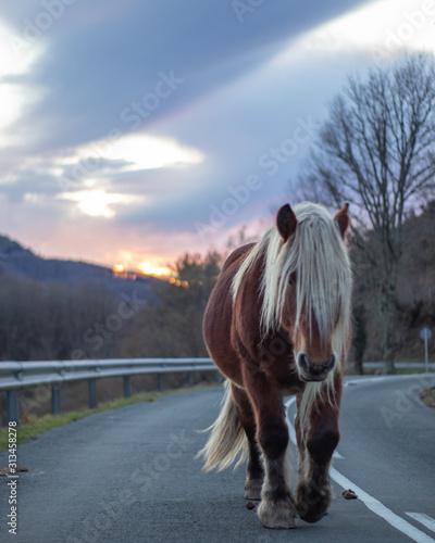 Fotografía  caballo